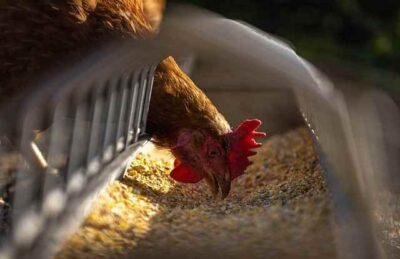 Trasporto mangimi e alimentari animali